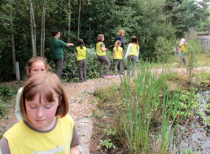 Conservation work at Avon Heath Country Park